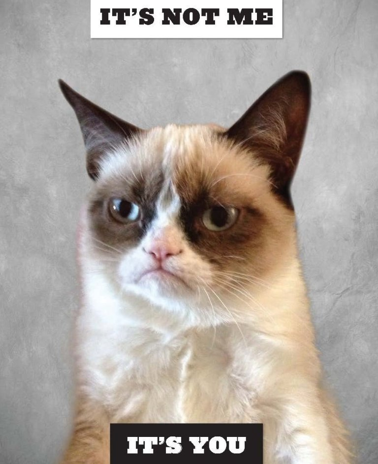 Why-Is-the-Grumpy-Cat-Always-Angry-15 Why Is the Grumpy Cat Always Angry?