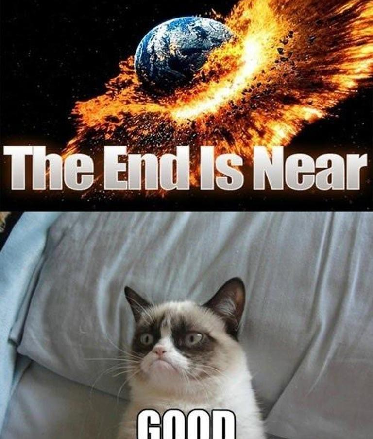Why-Is-the-Grumpy-Cat-Always-Angry-17 Why Is the Grumpy Cat Always Angry?