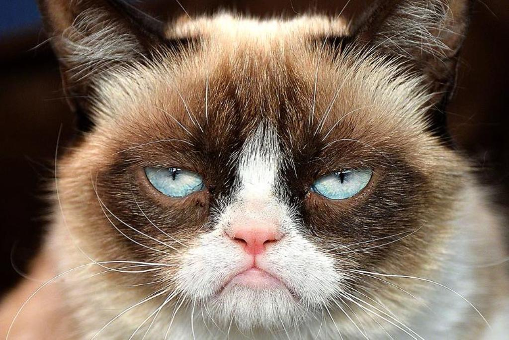 Why-Is-the-Grumpy-Cat-Always-Angry-3 Why Is the Grumpy Cat Always Angry?
