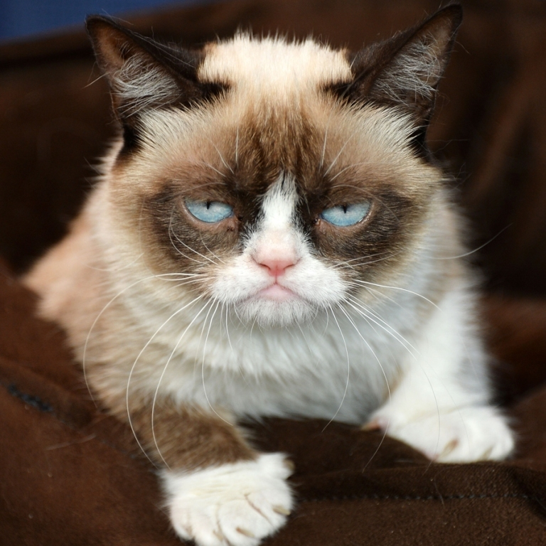 Why-Is-the-Grumpy-Cat-Always-Angry-4 Why Is the Grumpy Cat Always Angry?