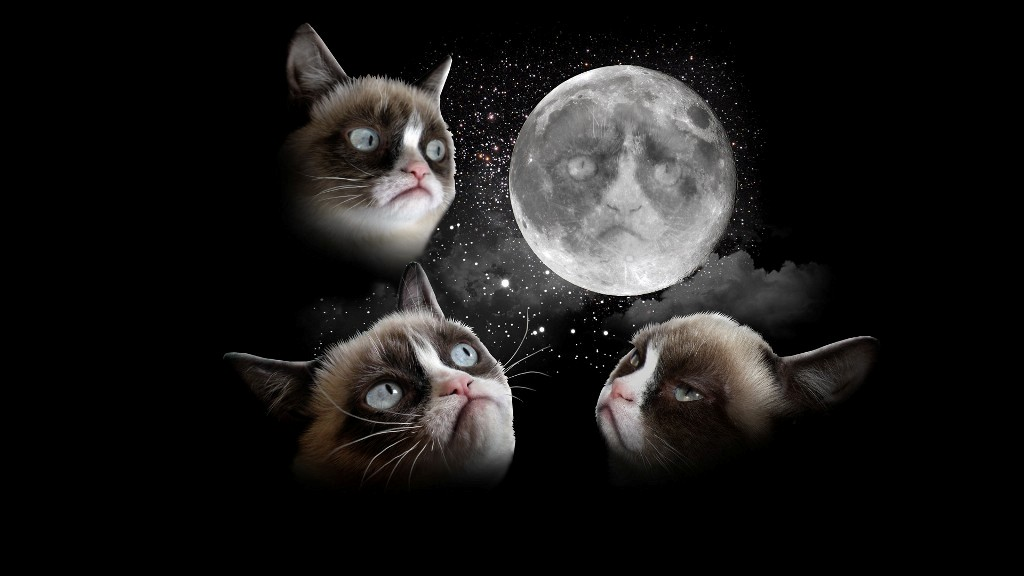 Why-Is-the-Grumpy-Cat-Always-Angry-5 Why Is the Grumpy Cat Always Angry?