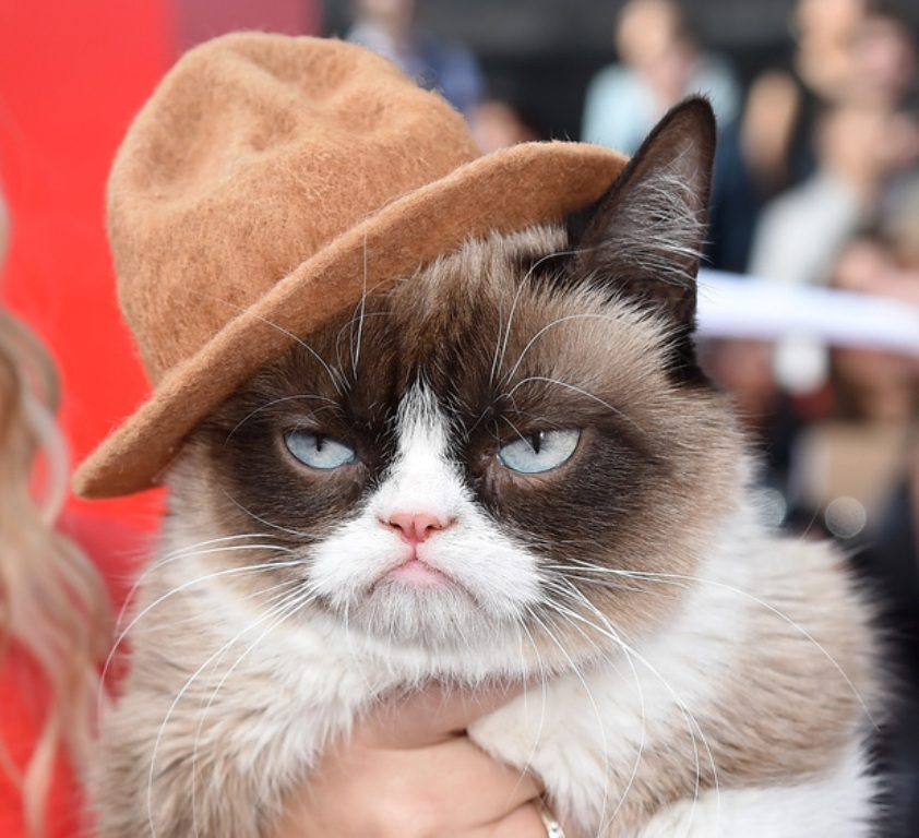 Why-Is-the-Grumpy-Cat-Always-Angry-6 Why Is the Grumpy Cat Always Angry?