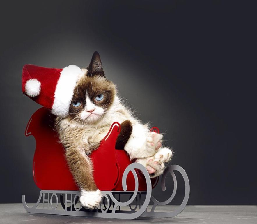 Why-Is-the-Grumpy-Cat-Always-Angry-8 Why Is the Grumpy Cat Always Angry?
