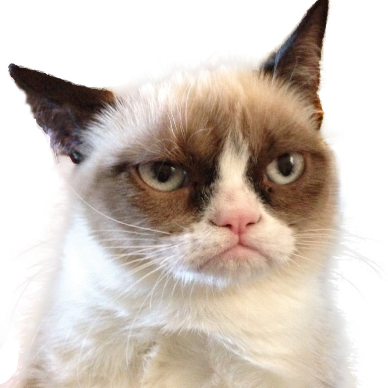 Why-Is-the-Grumpy-Cat-Always-Angry Why Is the Grumpy Cat Always Angry?