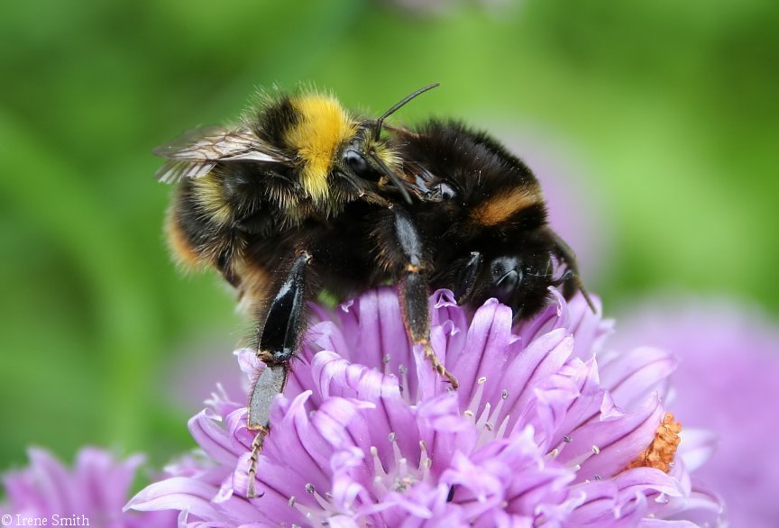 4774798343_53678ed22d_b Amazing Facts About Honeybees