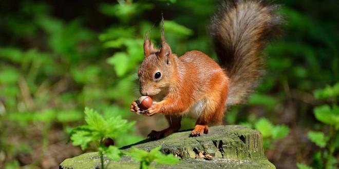 Cute Squirrel Wide Desktop Background