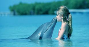7026549-dolphin (1)