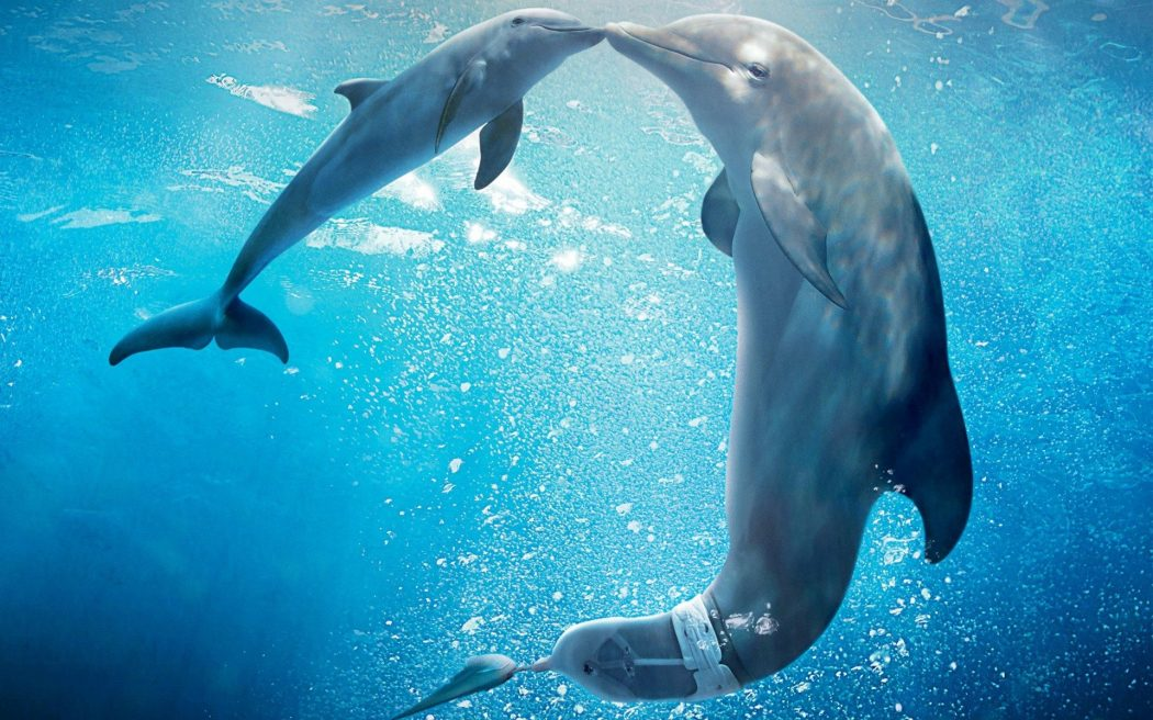 Dolphin-Tale-2 What Do You Know About Dolphin Superpowers?