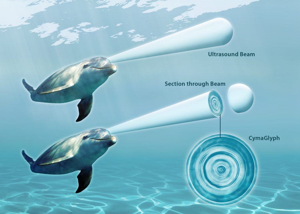 Dolphin_UltrasoundBeam_HR-12 What Do You Know About Dolphin Superpowers?