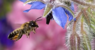 Amazing Facts About Honeybees