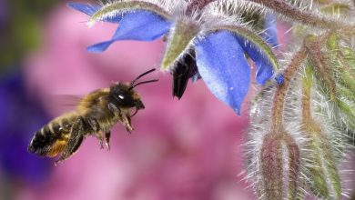 Photo of Amazing Facts About Honeybees