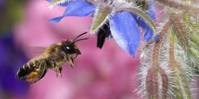 animal-wallpapers-honey-bee-wallpaper-wallpaper-31859