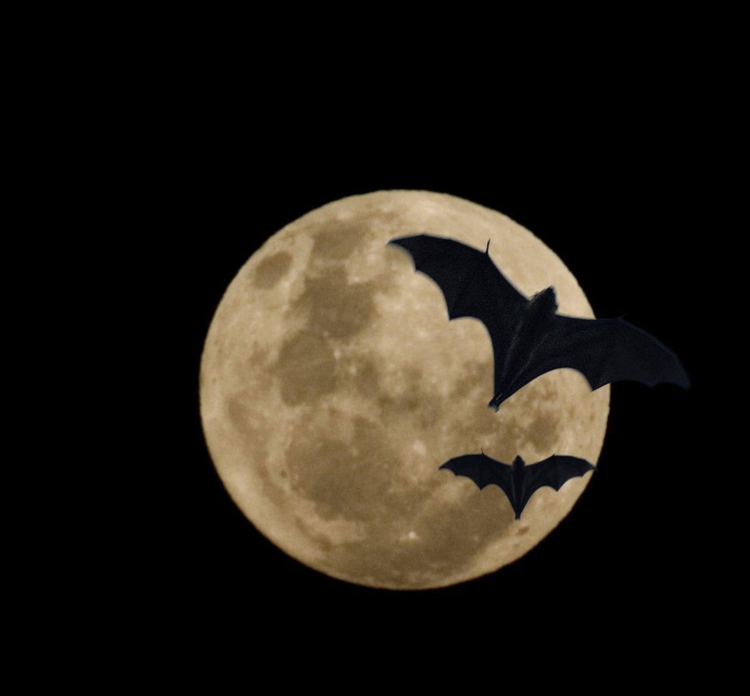 bats-and-the-moon Adorable Facts You Should Know About Some Animals