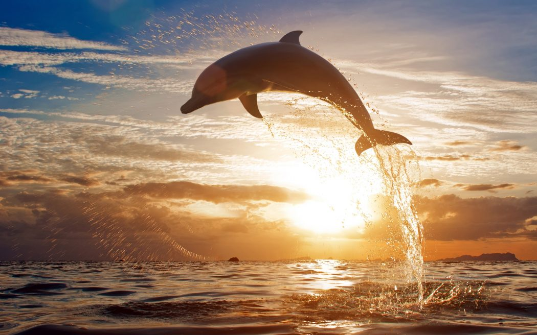 beach-wallpapers-dolphin-sunset-wallpaper-36946 What Do You Know About Dolphin Superpowers?