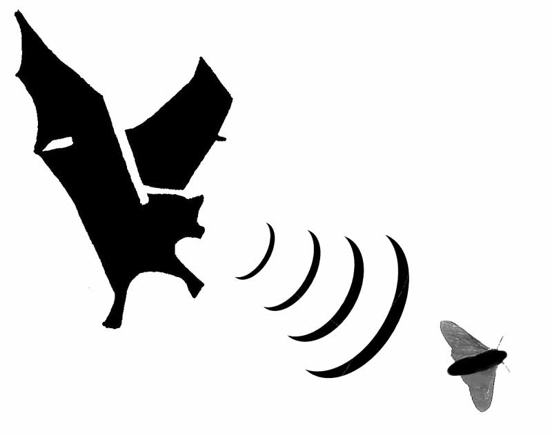echobatty Adorable Facts You Should Know About Some Animals
