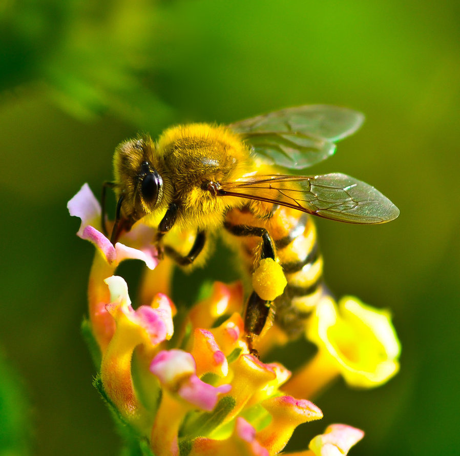 Amazing Facts About Honey Bees – Wow Amazing