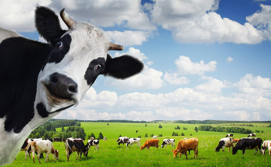 innercowhero Adorable Facts You Should Know About Some Animals