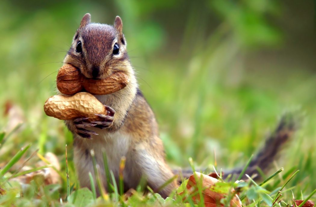 squirrel-nut-cute-animal-nature-grass-1920x12801 Adorable Facts You Should Know About Some Animals