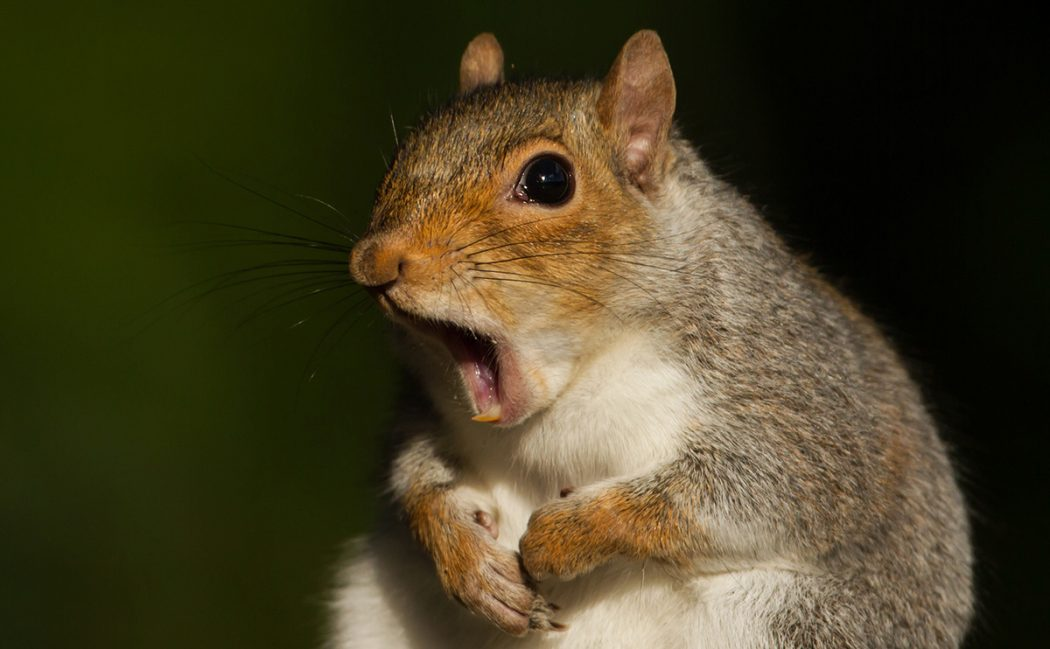 squirrel Adorable Facts You Should Know About Some Animals