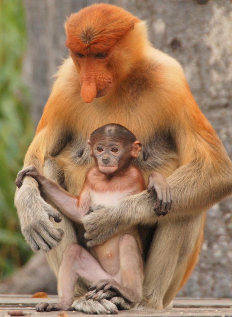 11019763153_449920678d_b Top 10 Strangest Wild Animals in The World