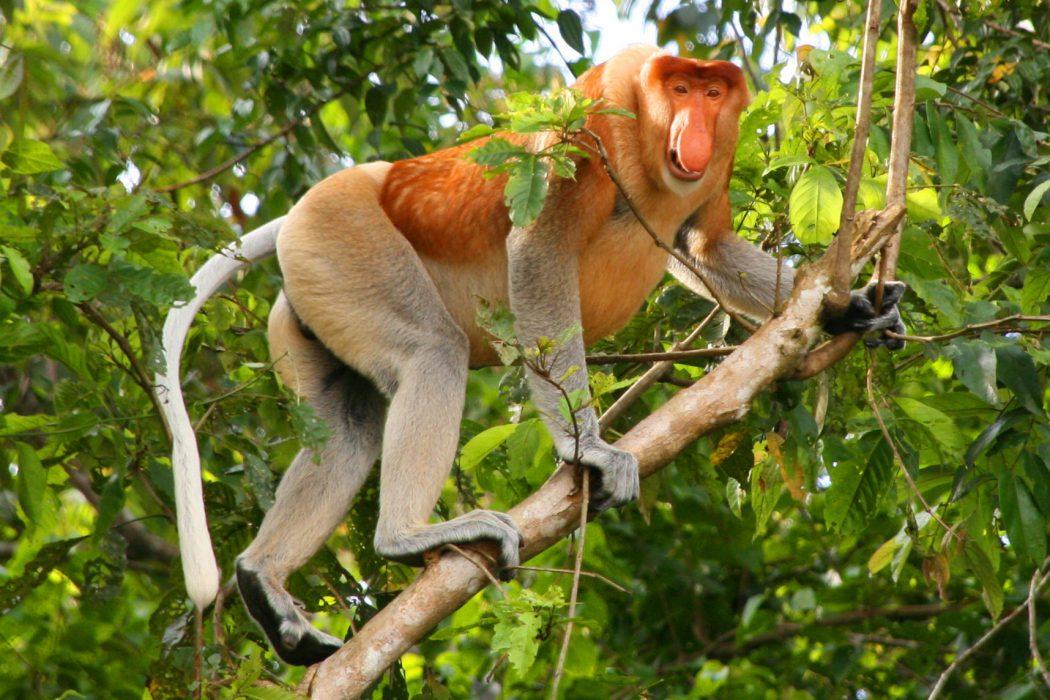 4546111 Top 10 Strangest Wild Animals in The World