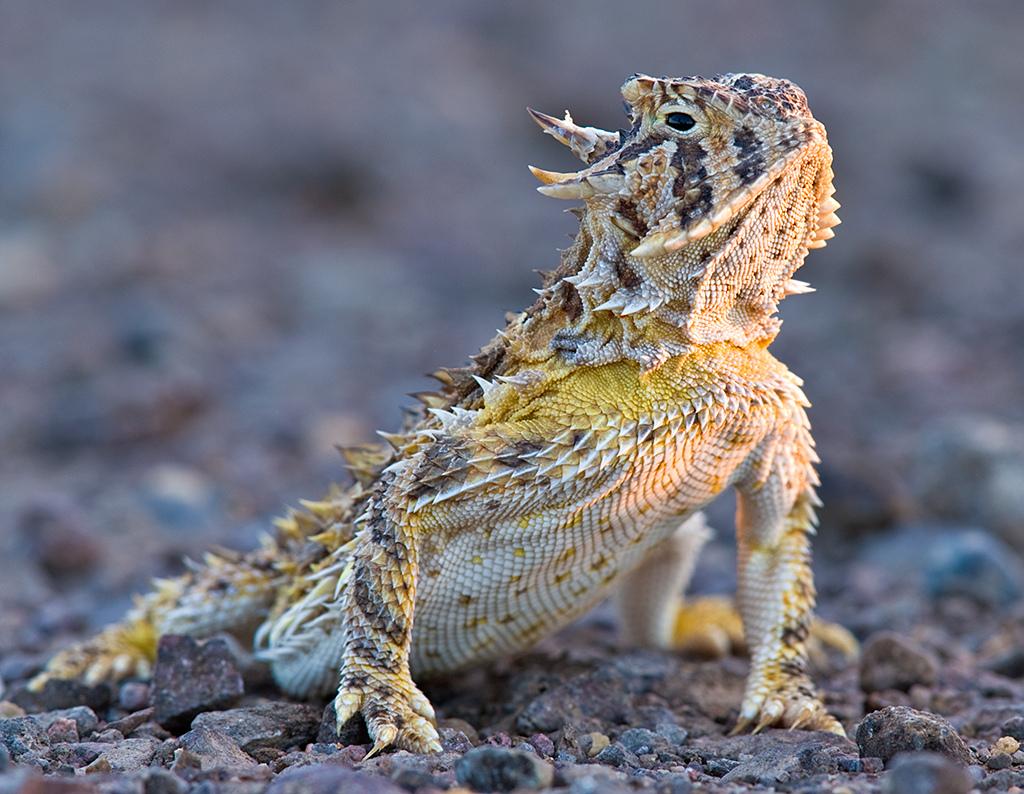 8296264687_2a95f3b3cf_b Top 10 Strangest Wild Animals in The World