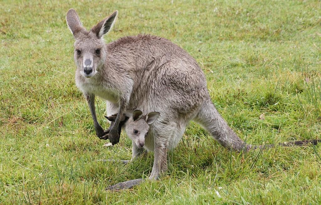 8342511736_4f766df707_b Top 10 Strangest Wild Animals in The World