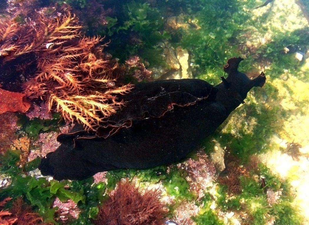 Black_sea_hare_Povoa_de_Varzim Top 10 Strangest Wild Animals in The World