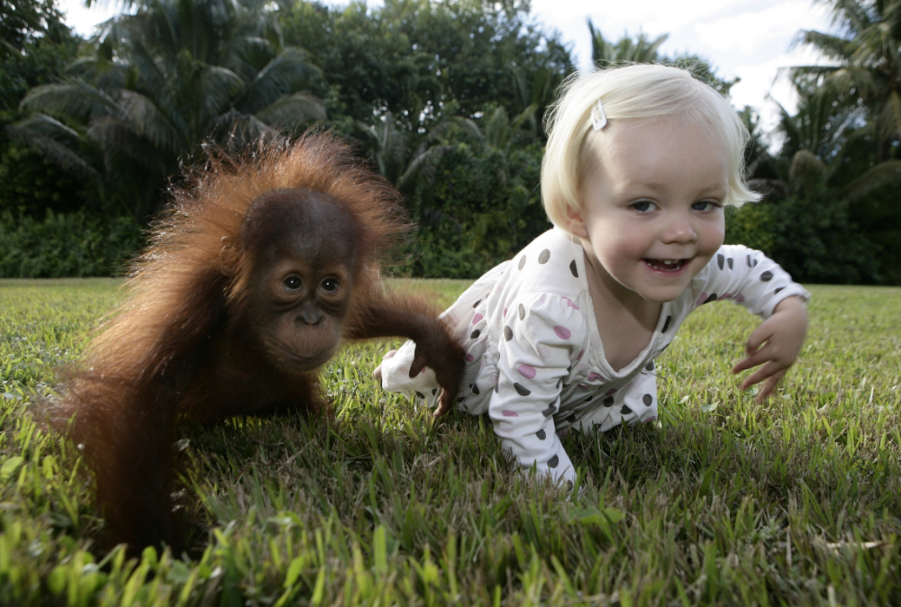 human-chimpanzee-babies_03 Amazing Facts About DNA