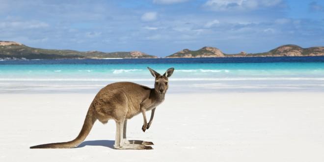 kangaroo-on-beach-1
