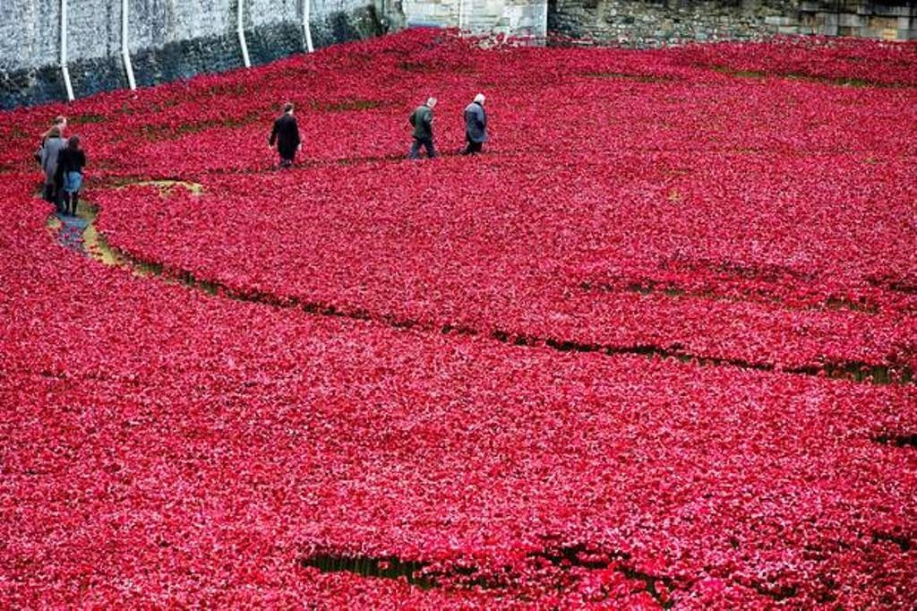 888246-Breathtaking-Poppies-Make-the-Tower-of-London-More-Stunning-141 888,246 Breathtaking Poppies Make the Tower of London More Stunning