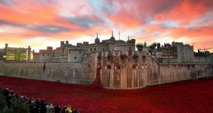 888,246 Breathtaking Poppies Make the Tower of London More Stunning (9)