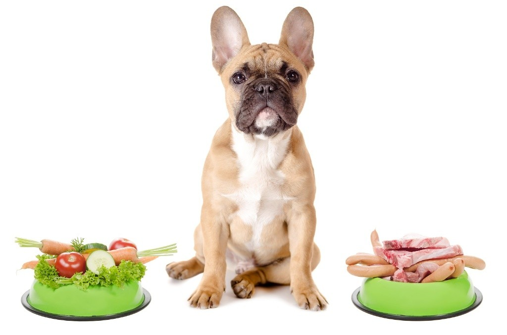 Does-Your-Pet-Have-Some-Kind-of-Allergy-1 Does Your Pet Have Some Kind of Allergy?
