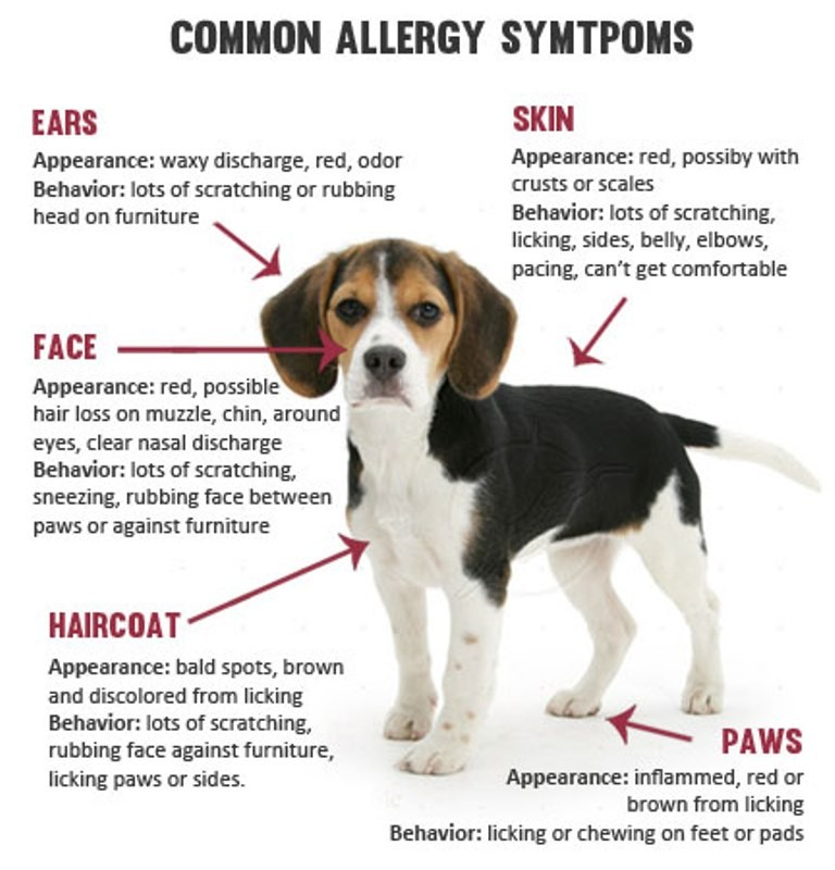 Does-Your-Pet-Have-Some-Kind-of-Allergy-14 Does Your Pet Have Some Kind of Allergy?