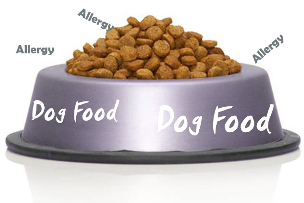 Does-Your-Pet-Have-Some-Kind-of-Allergy-17 Does Your Pet Have Some Kind of Allergy?