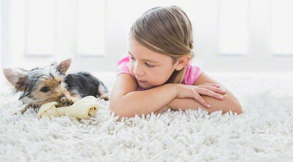 Does-Your-Pet-Have-Some-Kind-of-Allergy-18 Does Your Pet Have Some Kind of Allergy?