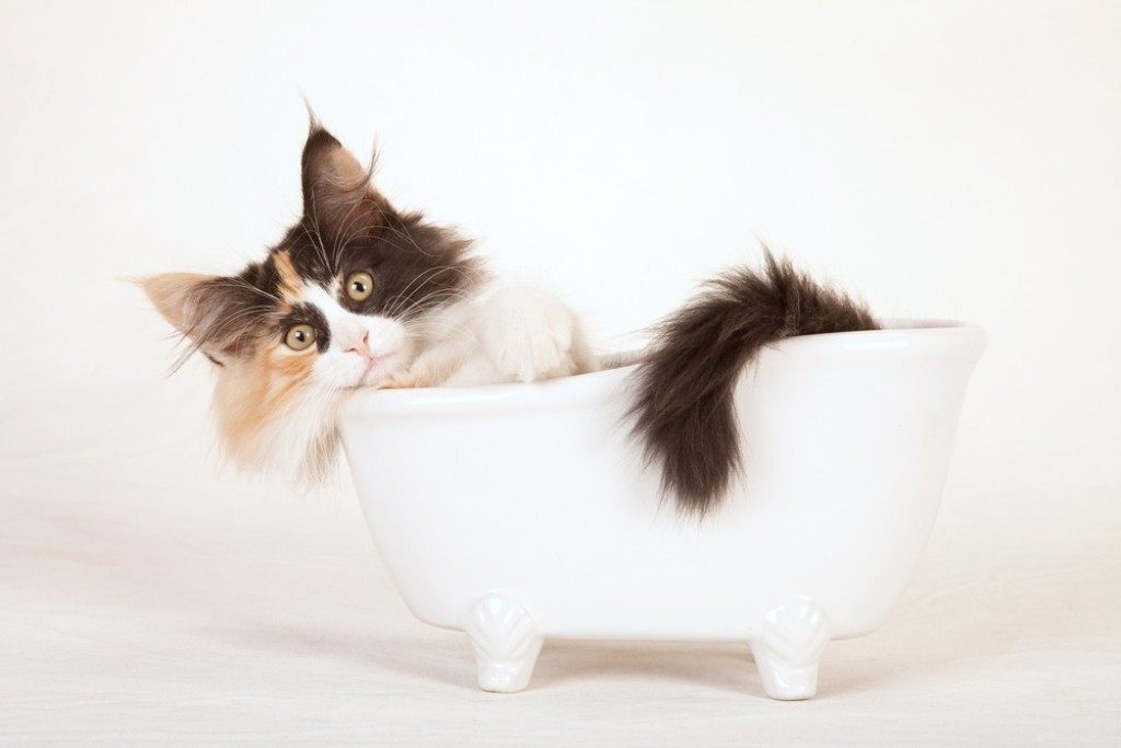 Does-Your-Pet-Have-Some-Kind-of-Allergy-21 Does Your Pet Have Some Kind of Allergy?