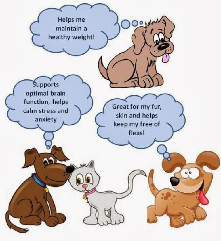 Does-Your-Pet-Have-Some-Kind-of-Allergy-26 Does Your Pet Have Some Kind of Allergy?