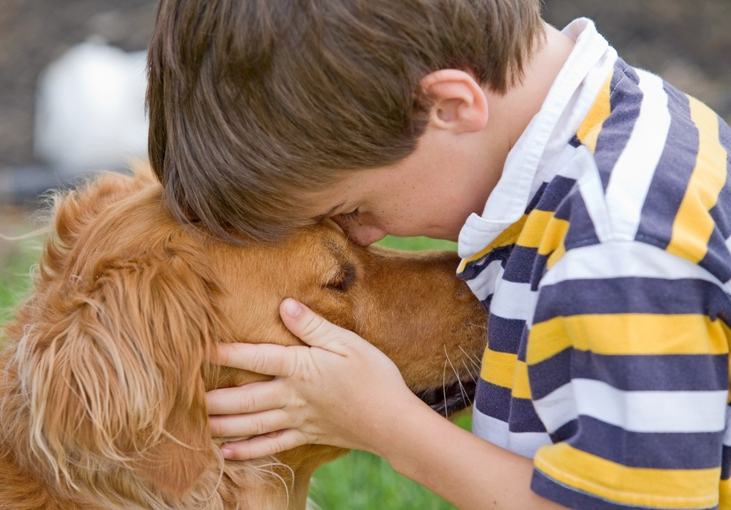 Does-Your-Pet-Have-Some-Kind-of-Allergy-28 Does Your Pet Have Some Kind of Allergy?