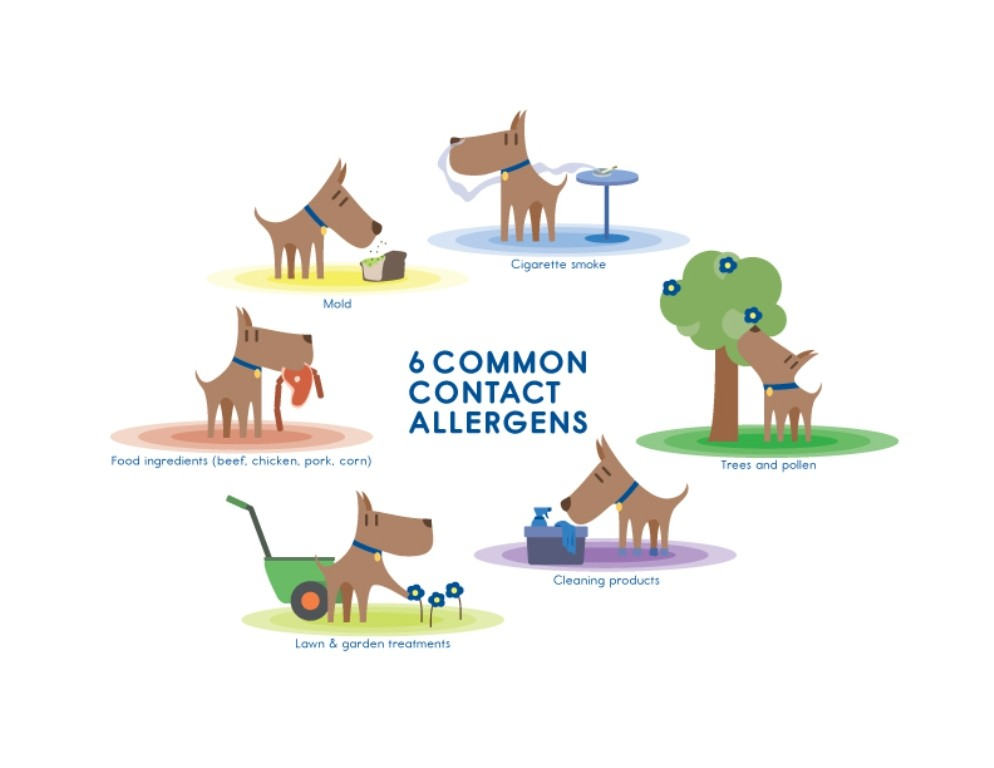 Does-Your-Pet-Have-Some-Kind-of-Allergy-4 Does Your Pet Have Some Kind of Allergy?