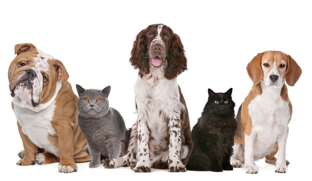 Does-Your-Pet-Have-Some-Kind-of-Allergy-6 Does Your Pet Have Some Kind of Allergy?