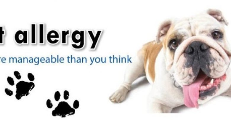 Photo of Does Your Pet Have Some Kind of Allergy?
