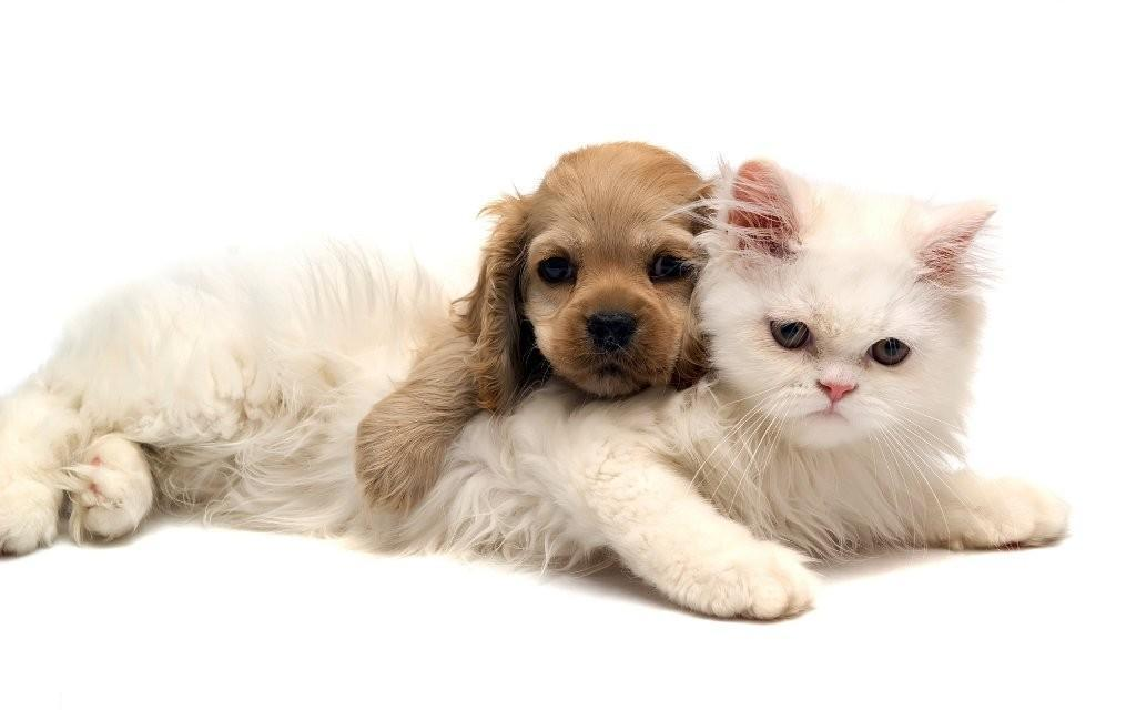 The-Main-Health-Guide-to-Take-Care-of-Your-Pets-110 The Main Health Guide to Take Care of Your Pets