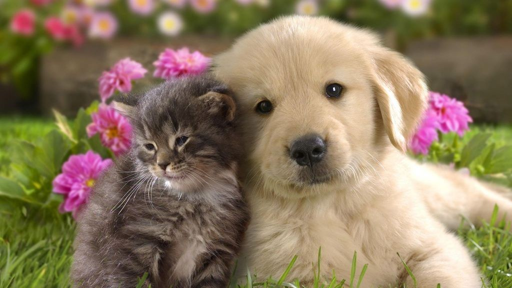 The-Main-Health-Guide-to-Take-Care-of-Your-Pets-281 The Main Health Guide to Take Care of Your Pets