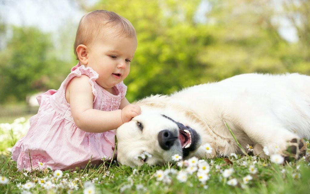 The-Main-Health-Guide-to-Take-Care-of-Your-Pets-291 The Main Health Guide to Take Care of Your Pets