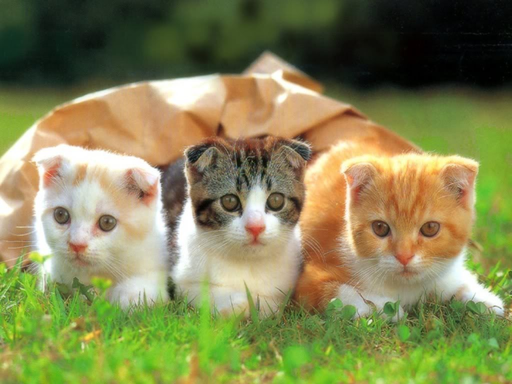 The-Main-Health-Guide-to-Take-Care-of-Your-Pets-321 The Main Health Guide to Take Care of Your Pets
