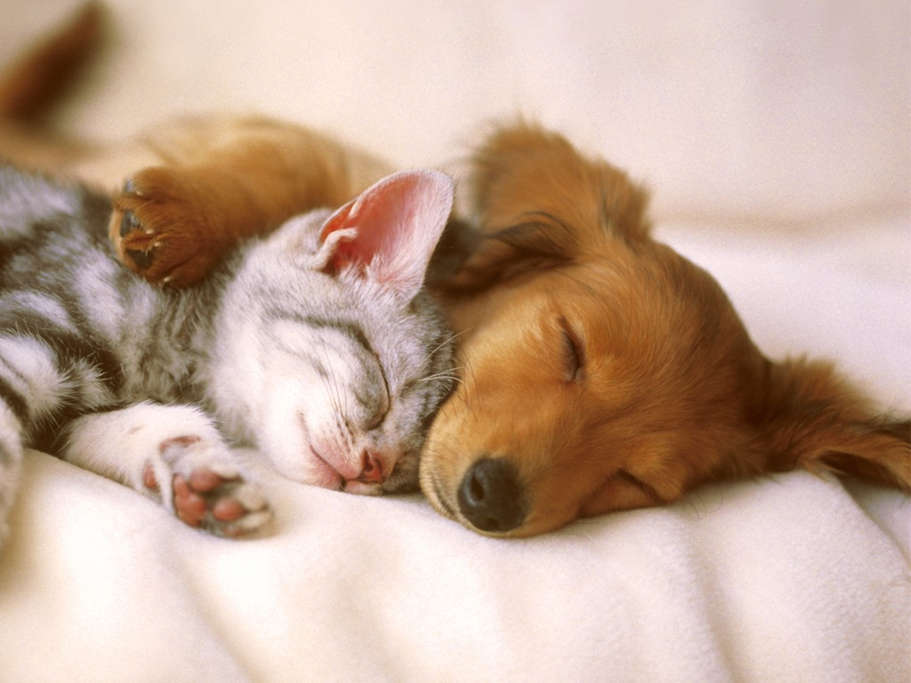 The-Main-Health-Guide-to-Take-Care-of-Your-Pets-51 The Main Health Guide to Take Care of Your Pets