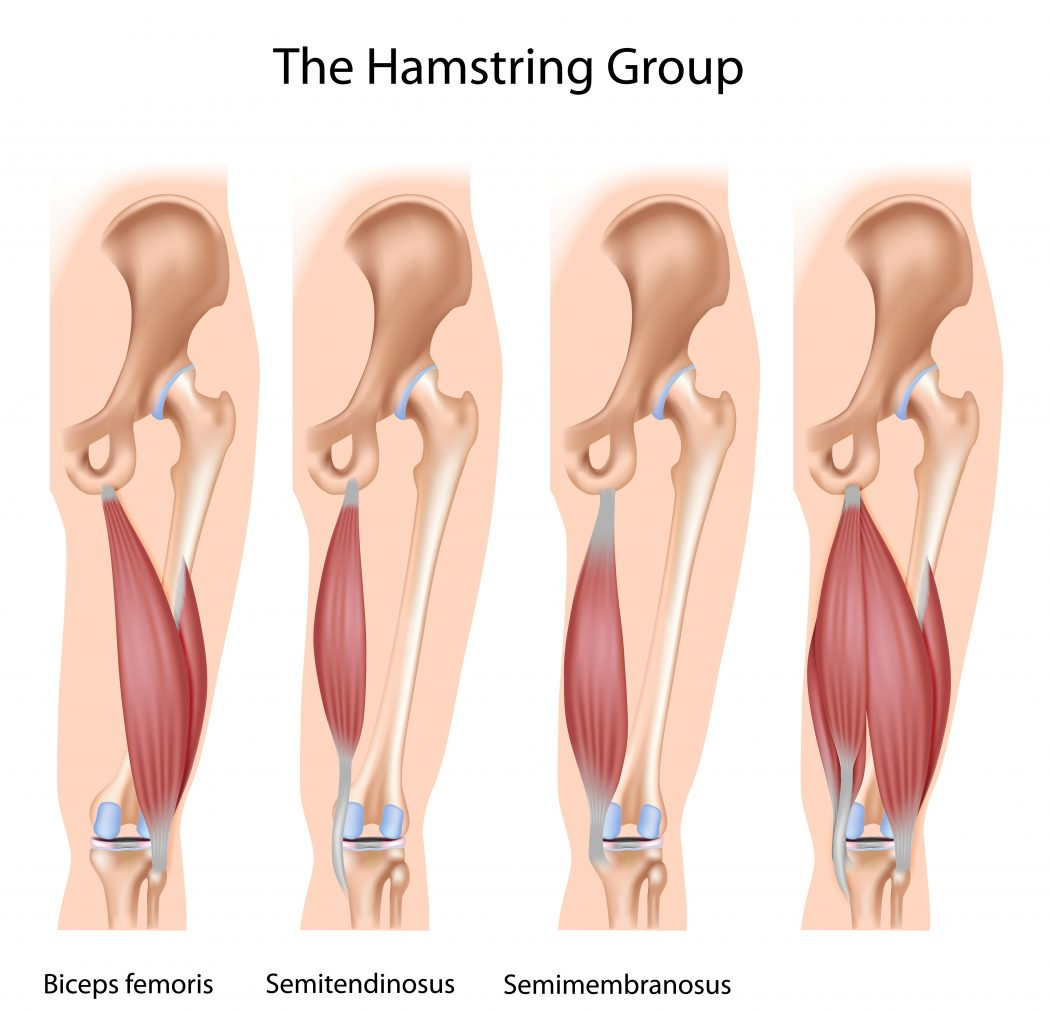 Bodyman-Hamstring-Group1 Top 10 Strongest Muscles in The Body