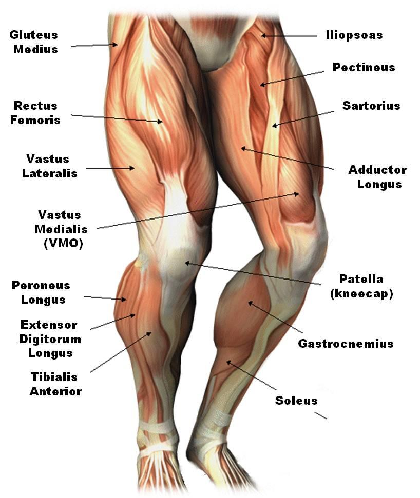 dd2f63873053f43bc5829b400f2b2d8847ccc4ce Top 10 Strongest Muscles in The Body