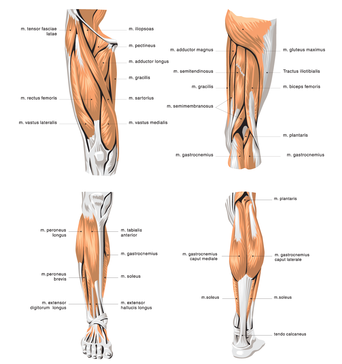 g5-51 Top 10 Strongest Muscles in The Body